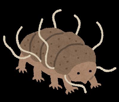 最強!? 全然死なない虫「クマムシ」。寿命はどのくらい ...