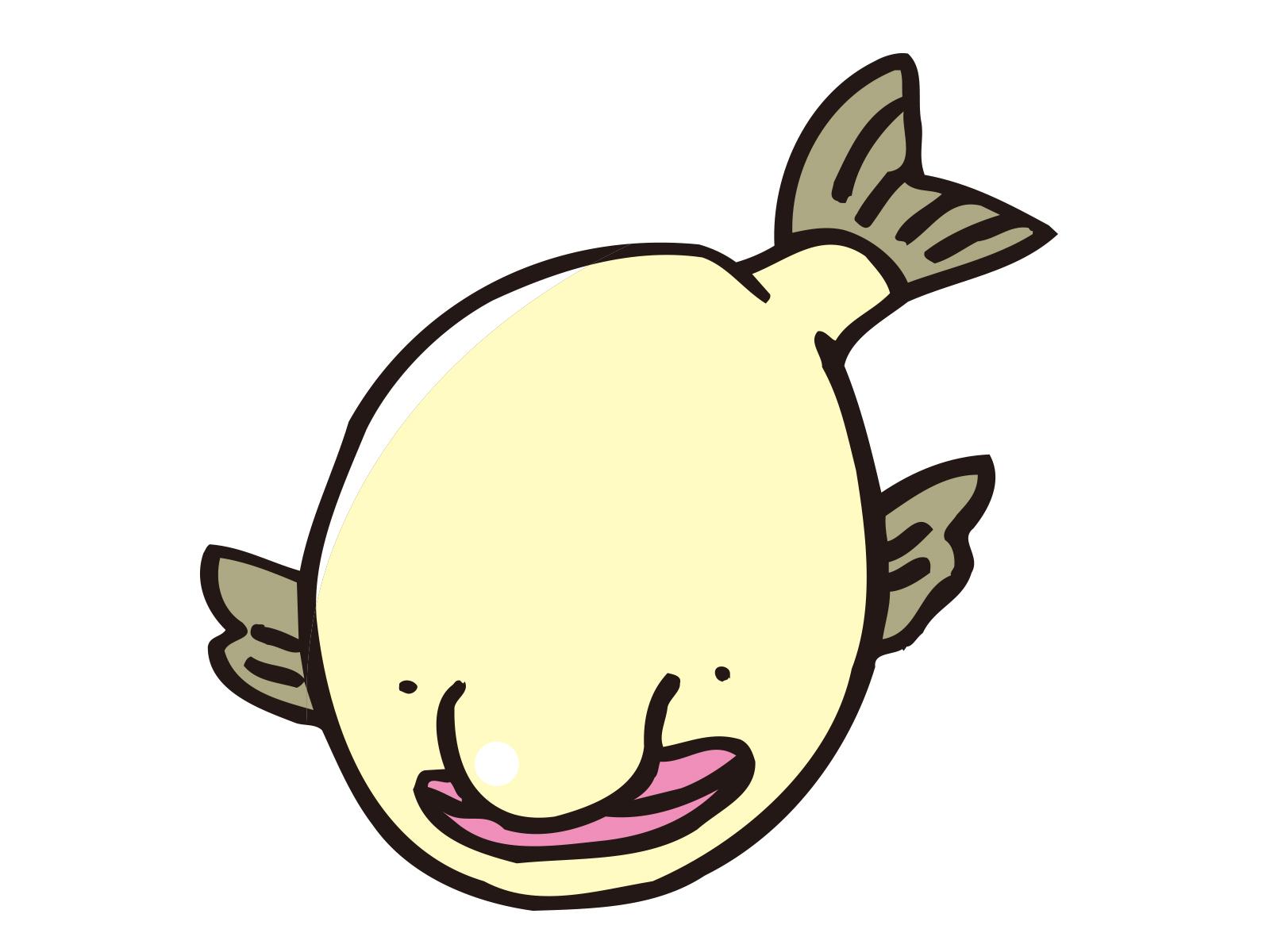 ブサイク 深海 魚